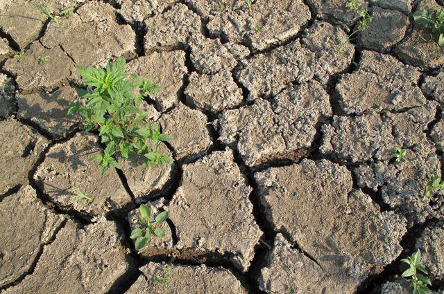 Специальные программы от засухи в Саратовской области