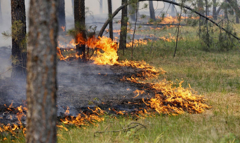 ТОП-5 мест, где в Саратове можно пожарить шашлык и не нарваться на штраф